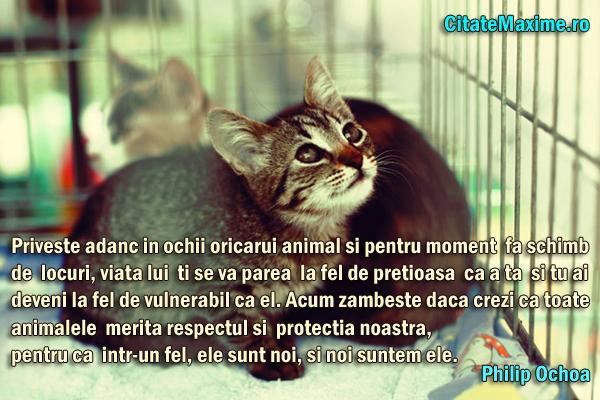 citate despre animale Priveste adanc in ochii oricarui animal si pentru moment fa schimb  citate despre animale